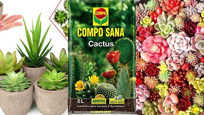 PLANTA CACTUS